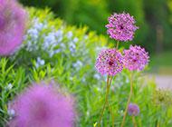 唯美好看的田园花卉壁纸