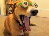 狗狗搞笑表情图之见到美女后