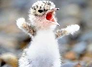 搞笑呆萌动物图之愤怒的小鸟