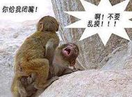 超邪恶内涵图之激情的猴子