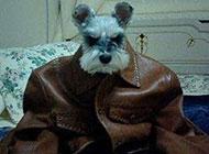 奇葩狗狗霸气造型图片