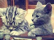 微信搞怪图片之失恋后的猫
