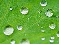 绿色叶子上的露珠ppt背景图片
