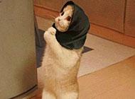可爱搞笑的小猫动物图片