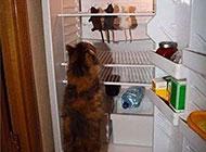 爆笑动物图片之冰箱的存货