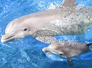 海中的哺乳动物海豚高清壁纸