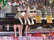看美女的小猪恶搞图片