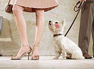 羞愧的狗狗搞笑PS图