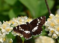花朵上的蝴蝶高清桌面壁纸