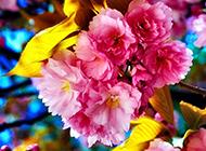 清晨盛开的粉色花卉高清桌面壁纸