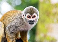 动物园的可爱大猩猩图片