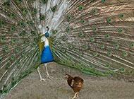 最新超搞笑动物图片