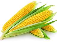 金灿灿的玉米高清图片素材