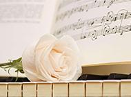 钢琴上的玫瑰花艺术照欣赏