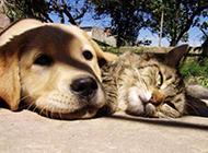 动物搞笑囧图之无聊的一天