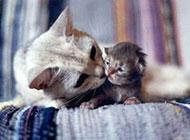 超呆萌可爱动物图片