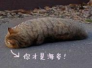 超萌猫咪动物带字图片