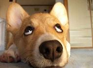 翻白眼的动物搞笑表情图片
