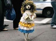 法国街头的搞笑动物PS图