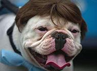 最新动物狗狗搞笑发型图片