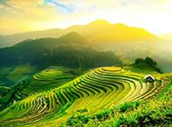 绿色高清梯田风景图片欣赏