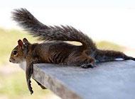 最新爆笑动物图片来袭