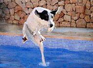 水上的二货狗狗搞笑图片