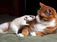 可爱的小动物搞怪图片