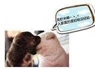 狗狗的初吻qq爆笑图片