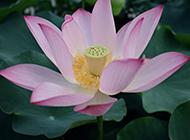 小清新唯美花卉壁纸赏析