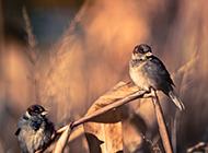 枝头栖息的小鸟动物桌面壁纸