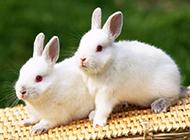 精选可爱萌萌的小兔子高清图片