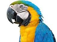 最漂亮的鹦鹉高清图片