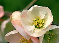 高清花朵ppt唯美背景图