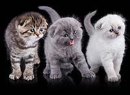 超萌的猫咪高清图片素材
