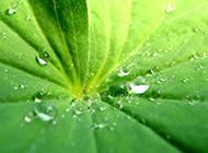唯美清新的绿叶ppt背景图片