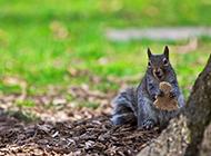 森林里的小动物松鼠高清壁纸