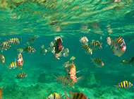 蔚为壮观的海底世界鱼群图片