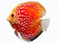 好看的热带鱼高清图片素材
