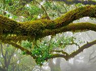 公园里的绿色树林桌面壁纸