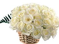 竹篮里的白玫瑰高清图片