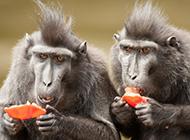 两只萌萌的猴子高清图片