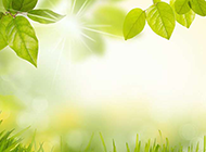 清新的绿叶草地背景图片