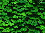 唯美小清新植物背景图片壁纸