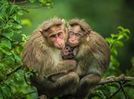 树枝上萌萌的猴子高清图片