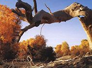 大自然树木景观实拍图片