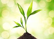 春天绿色植物图片素材