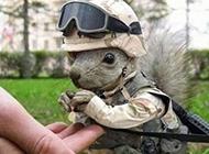 可爱的空军松鼠搞笑动物图片