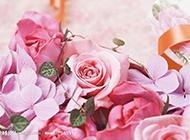 唯美纯真的粉色玫瑰背景图片