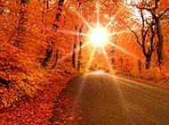 秋天的枫树林景色图片